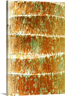 Hawaii, Oahu, Close-Up Of Coconut Palm Tree Bark Texture