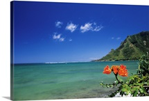Hawaii, Oahu, Kahana Bay, Clear Coastline With Bright Orange Flower