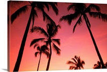 Hawaii, Silhouette Of Palm Trees At Sunset, Pink Sky