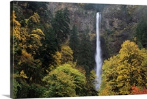 Oregon, Columbia River Gorge, Multnomah Falls Among Fall Colors