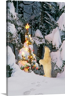 Polar bear cub standing on hind legs looking at star on christmas tree