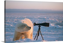 Polar Bear Stares into Camera Lens