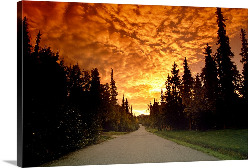 Road Going into Sunset Rural Anchorage SC AK Summer