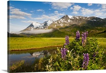 Scenic view of meadow and lupine wildflowers with Worthington Glacier