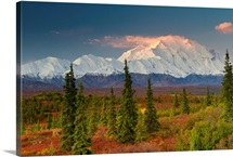 Scenic view of Mt. McKinley at sunrise with colorful tundra and boreal forest