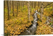 Small creek flows through autumn leaf covered forest floor Chugach State Park