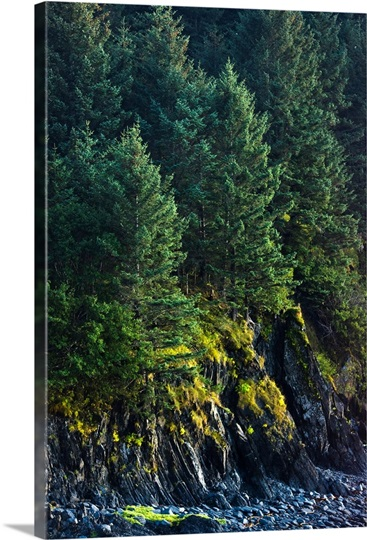 Spruce Tree forest, Chiniak Bay, Kodiak Island, Southwest Alaska, Fall