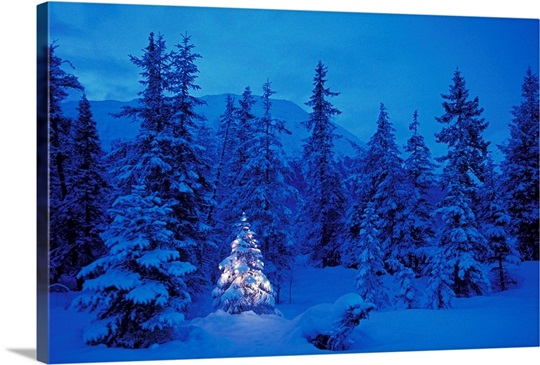 Christmas tree in the forest photo canvas print great