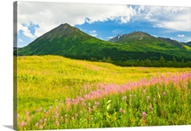 Summer scenic of Fireweed wildflowers in a green meadow in Turnagain Pass