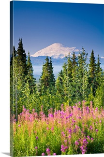 Summer scenic of Mt. Sanford and the Wrangell Mountains with Fireweed