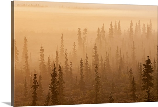 Sunrise over a foggy forest, Katmai National Park and Preserve, Southwest Alaska