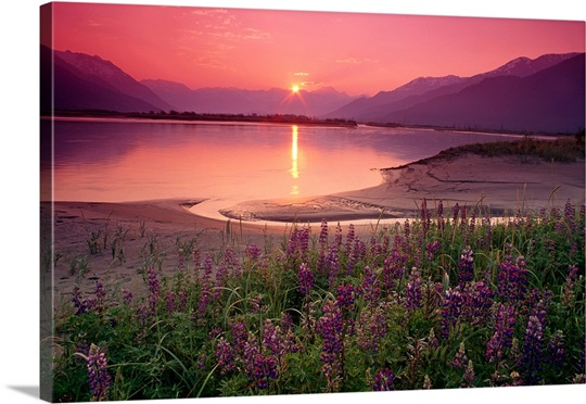 Sunrise Twentymile River &amp; Lupine SC AK summer scenic