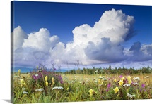 Towering Cumulus Clouds gather over meadow of wildflowers Alsek River