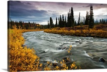 View of Brushkana Creek in the early morning with yellow fall colors along the creek