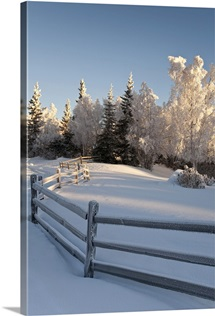Winter scenic of split rail fence and frosted Spruce and Birch trees