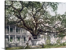 Old Oak at Hotel De Montross Biloxi Mississippi Vintage Photograph