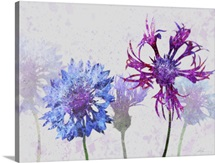 Colorful Cornflowers II