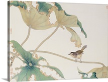 Bird on Lotus Leave