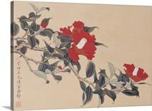 Red Cap Flower