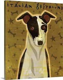 Italian Greyhound - Black and White