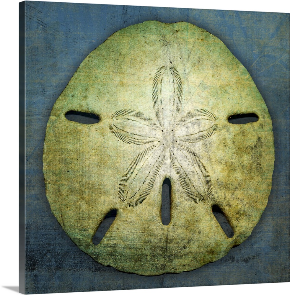Premium Thick Wrap Canvas Wall Art Entitled Sand Dollar Ebay