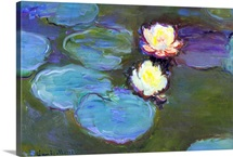 Water Lily, detail