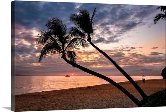 Coconut Palm Trees At Sunset On Maui, Hawaii Photo Canvas