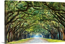 Savannah, Georgia, oak tree lined road