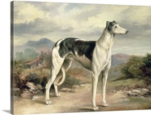 A Greyhound in a Hilly Landscape by James Beard