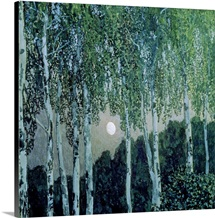 Birch Trees (oil on canvas)