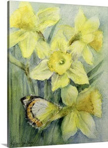 Delias Mysis (Union Jack) Butterfly on Daffodils
