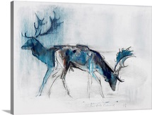 Fallow Bucks, Richmond, 2006 (charcoal