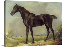 Golding Constable&amp;#39;s Black Riding-Horse, c.1805-10 (oil on panel)