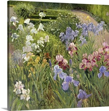 Irises at Bedfield (oil on canvas)