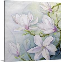 Magnolias (w/c)