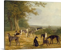 Nine Greyhounds in a Landscape (oil on canvas)