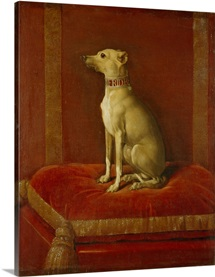 One of Frederick II's Italian greyhounds (oil on canvas)