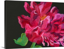 Paeonia 1 (acrylic on paper)