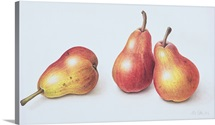 Red Pears, 1996 (w/c on paper)