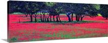 Red Shock, 1999 (oil on board)