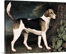 Ringwood, a Brocklesby Foxhound, 1792 (oil on canvas)