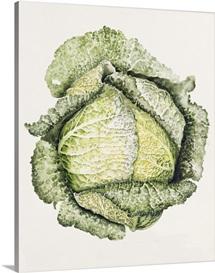 Savoy Cabbage (w/c)