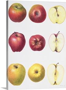 Six Apples, 1996 (w/c on paper)