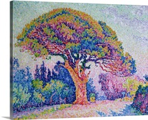 The Pine Tree at St. Tropez, 1909 (oil on canvas)