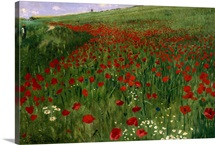 The Poppy Field, 1896 (oil on canvas)
