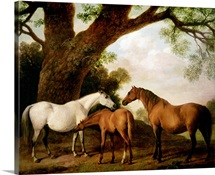 Two Shafto Mares and a Foal, 1774 (oil on panel)