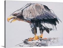 White tailed Sea Eagle, 2001 (charcoal