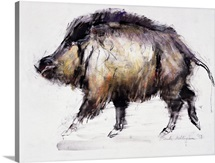 Wild Boar, 1999 (graphite, conte and charcoal on paper)