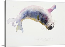 Young grey seal, Gweek, 2003 (w/c on paper)