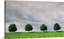 Cloudy Sky And Row Of Trees In Countryside